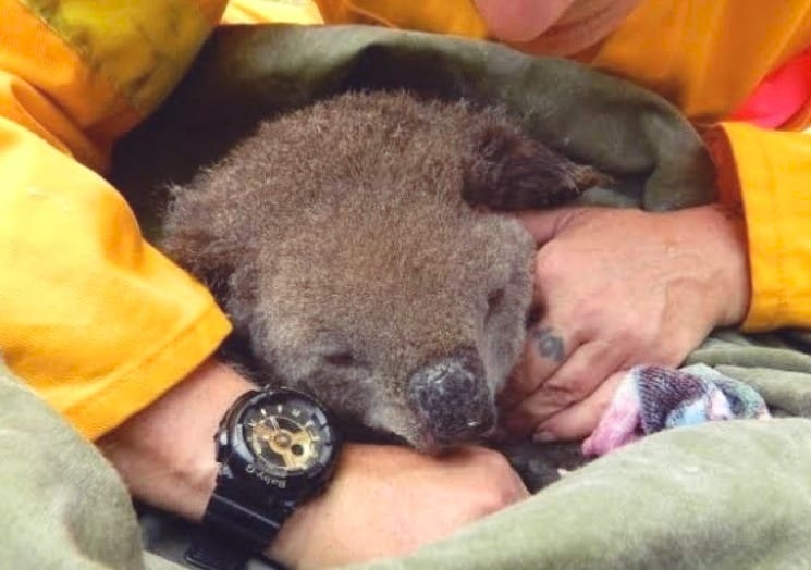 Does Experience Matter for Wildlife Rescue?