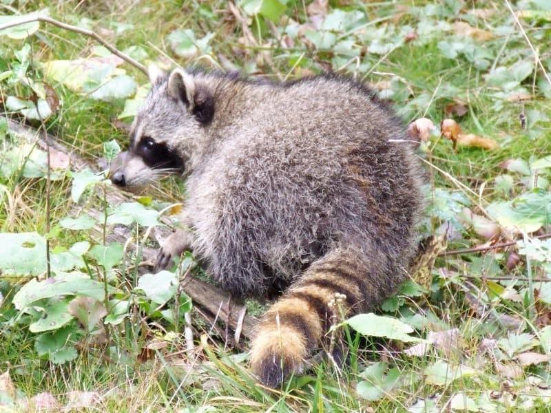 Ontario Wildlife Rescue