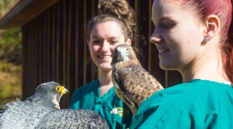 What Skills and Education You Need to Help with Wildlife Rehabilitation?